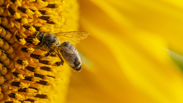 Bee in a yellow pollen