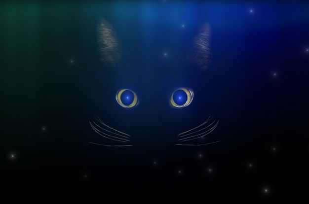 Black cat concept among starry sky