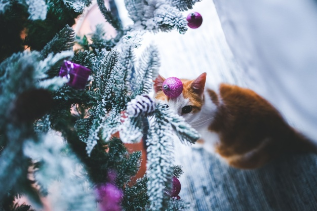 Branches of a christmas tree with snow and a cat